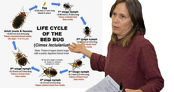 Begbugs