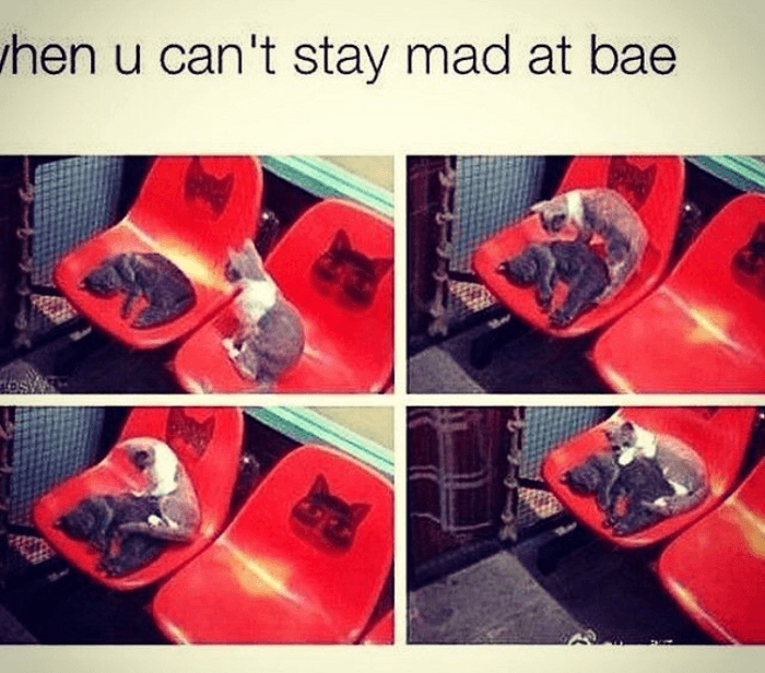 Can't Stay Mad