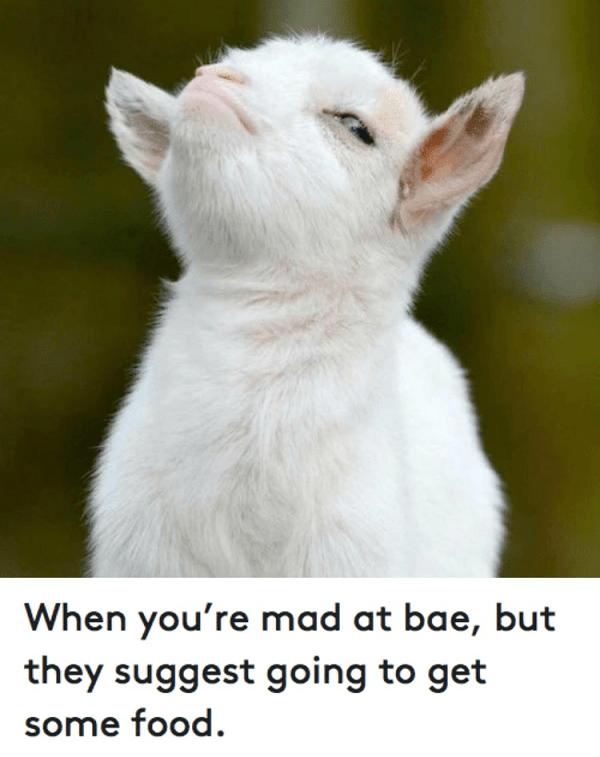 Contemplating Goat