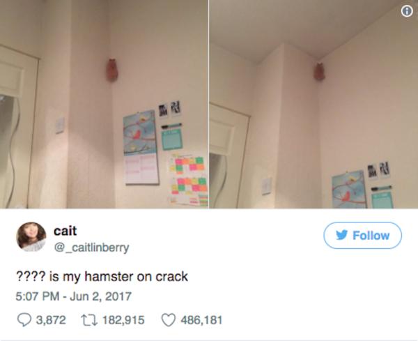 Crack Hamster