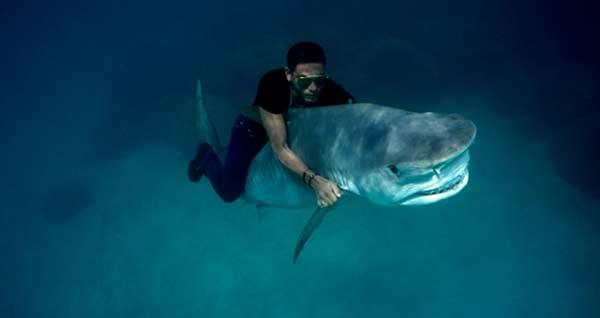 Shark Level