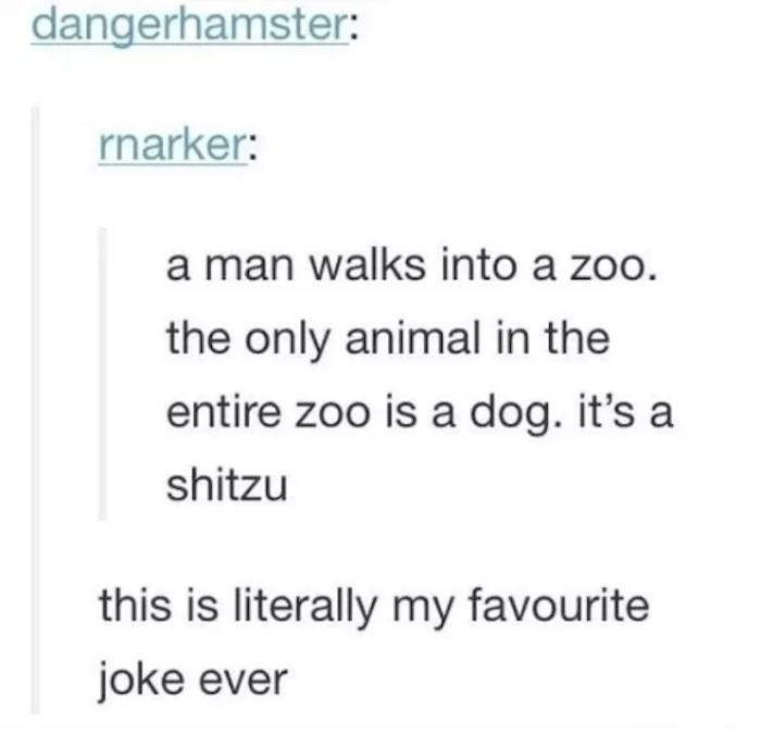 Shitzu