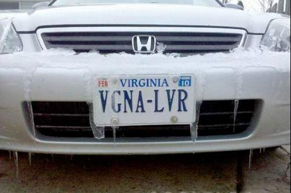 Vgna Lvr1