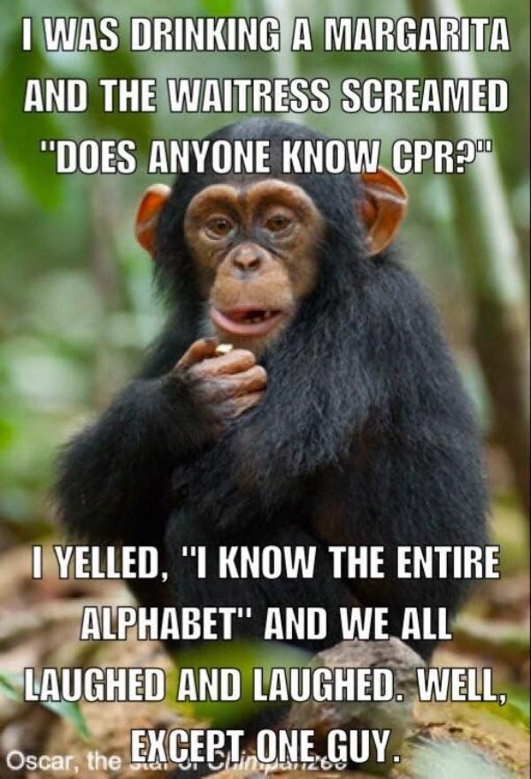 Cpr Monkey