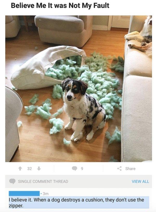 Dog Destroyer