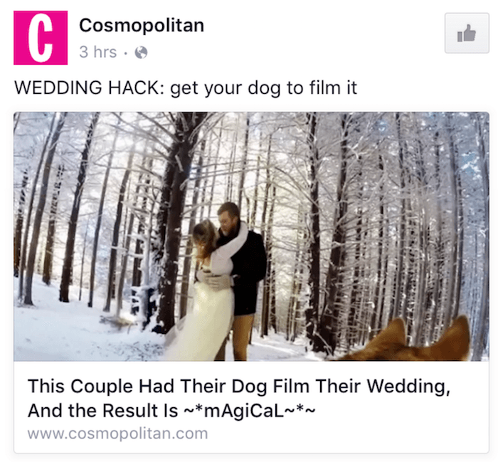 Dog Videographer