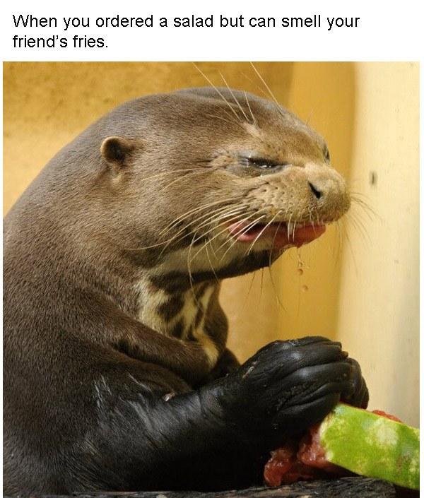 Fry Otter