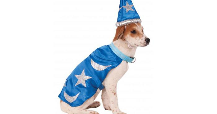 Sad Wizard Dog