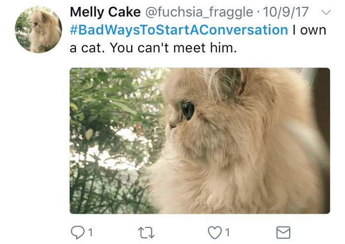 You Can't Meet My Cat