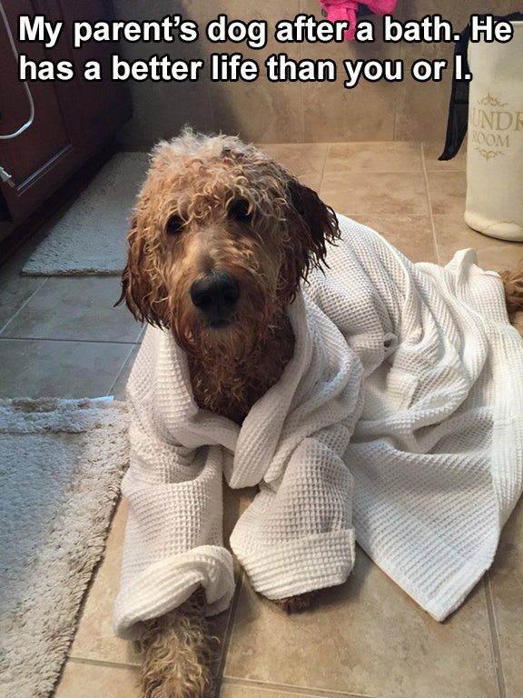 Spoiled Dog In A Bath Robe