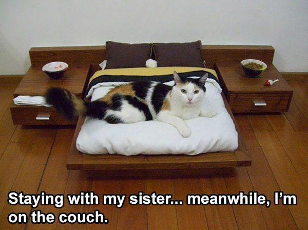 Bedroom Cat