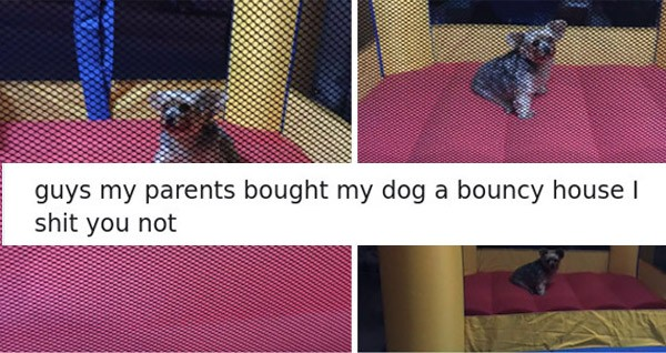 Bouncy Dog