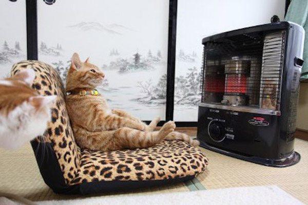 Cat Heater