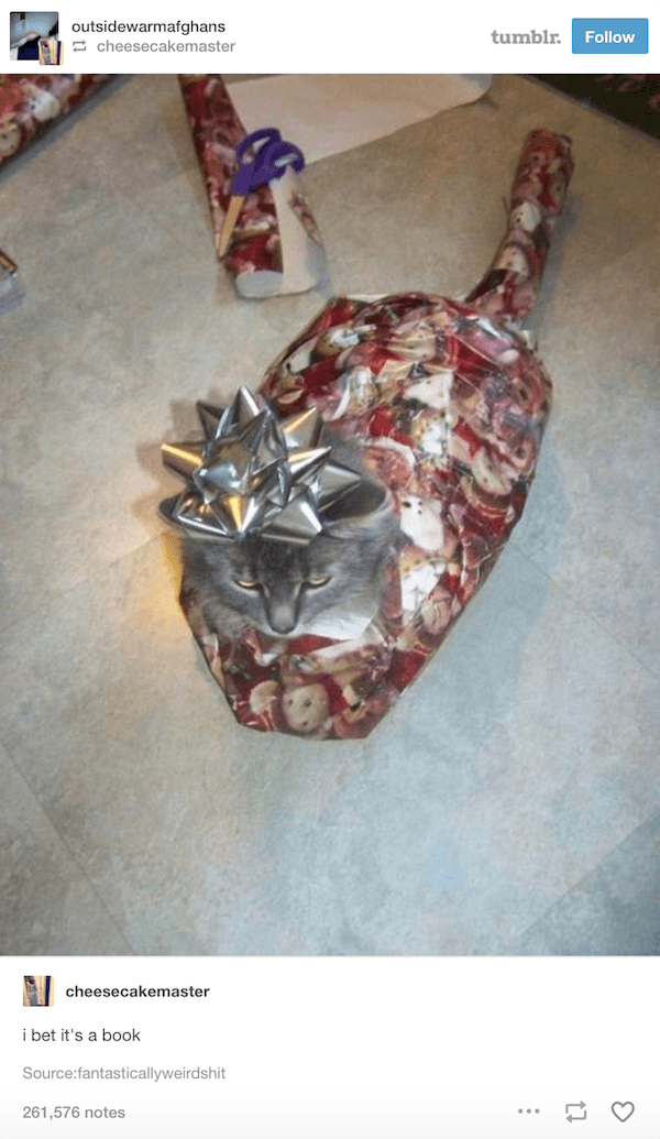 Cat Wrapped