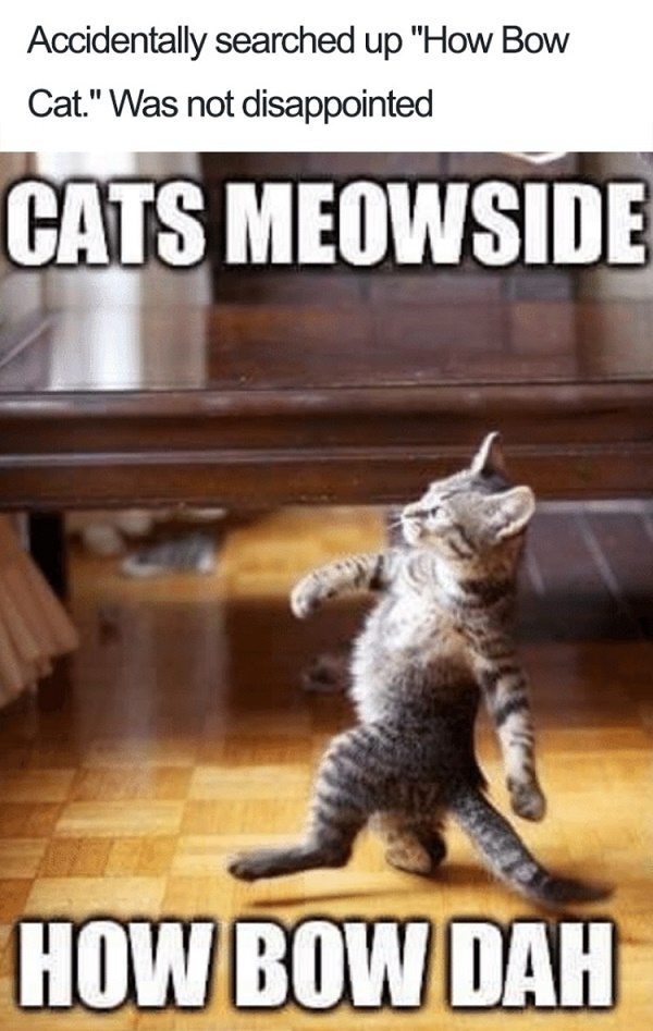 Cats Meowside