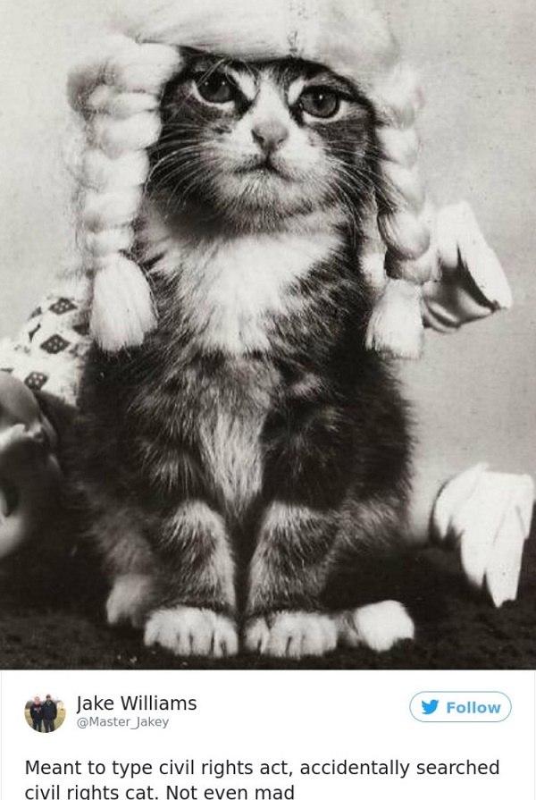 Civil Rights Cat