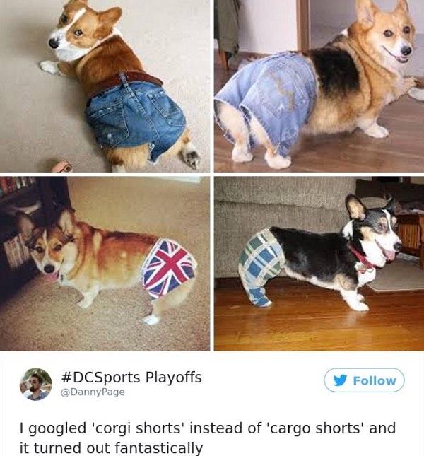 Corgi Shorts
