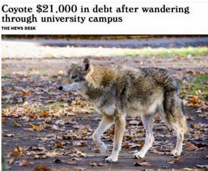 Coyote Debt