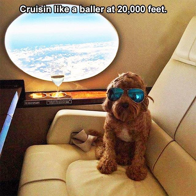 Cruisin Dog