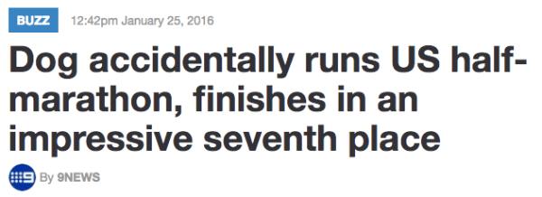 Dog Half Marathon