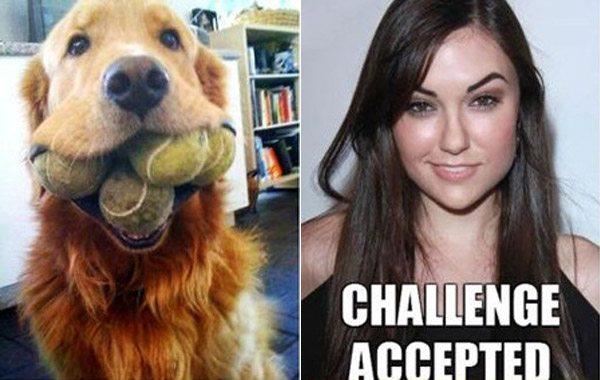 Dog Sasha