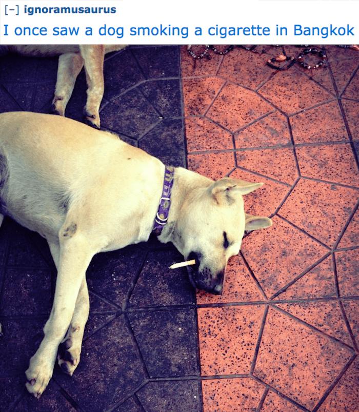 Dog Smoking