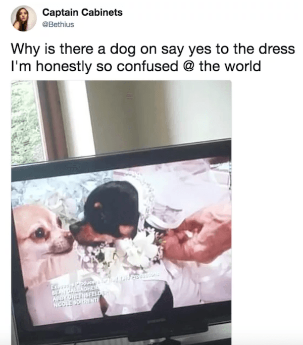 Dog Wedding On Say Yes To The Dress