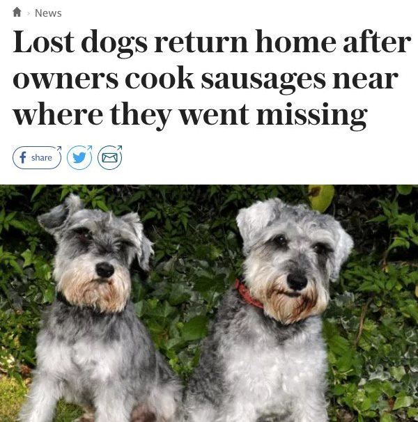 Funny News Headlines Dogs