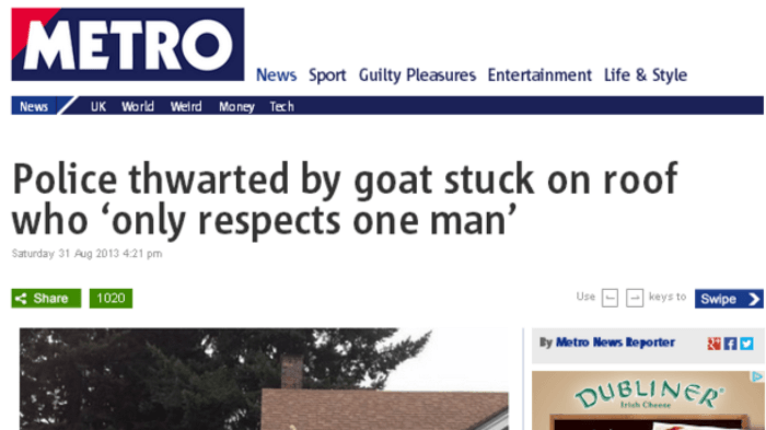 Goat Funny News Headlines