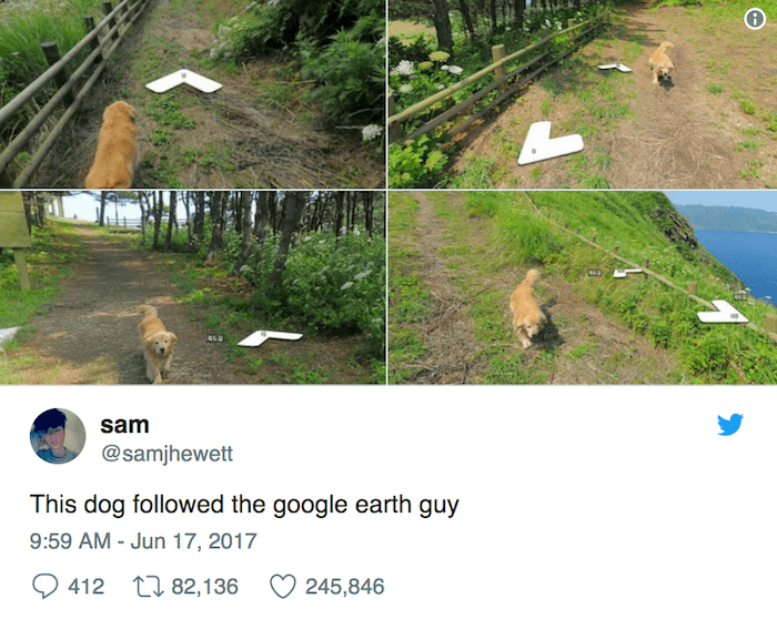 Google Earth Dog