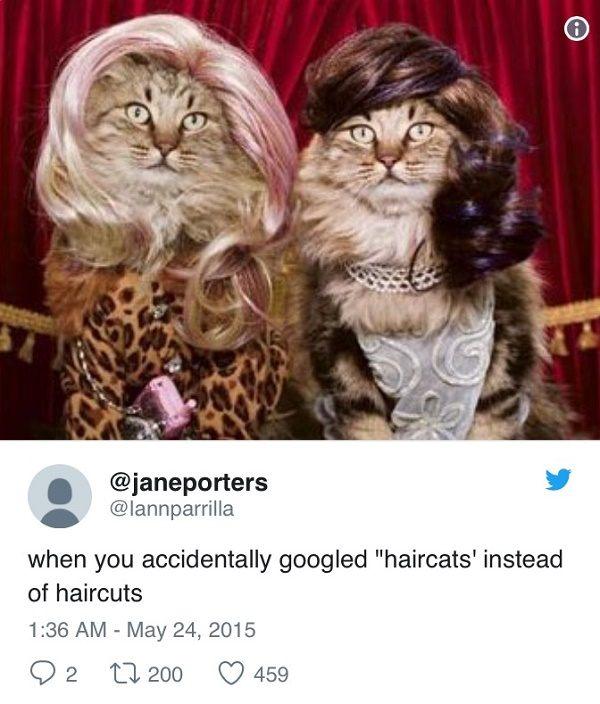 Haircats