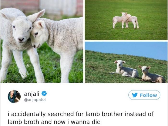 Lamb Brother