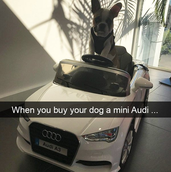 Mini Audi For A Dog
