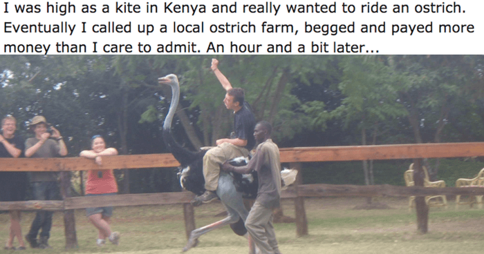 Ostrich Og