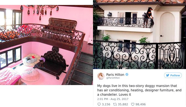Paris Hilton Spoiled Pets