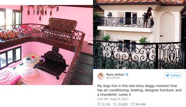 Paris Hilton Spoiled Pets