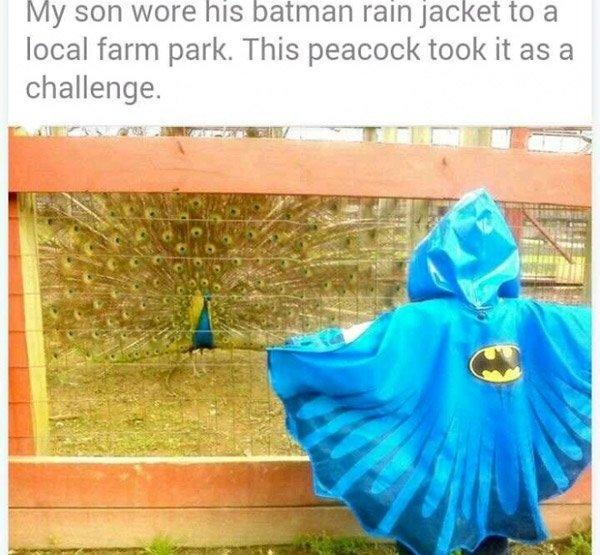 Peacock Batman