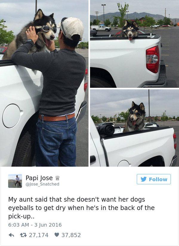 Pickup Dog