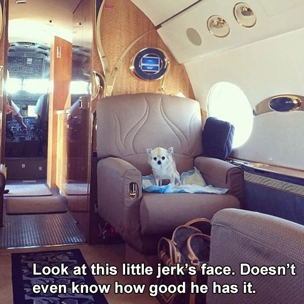 Richdog