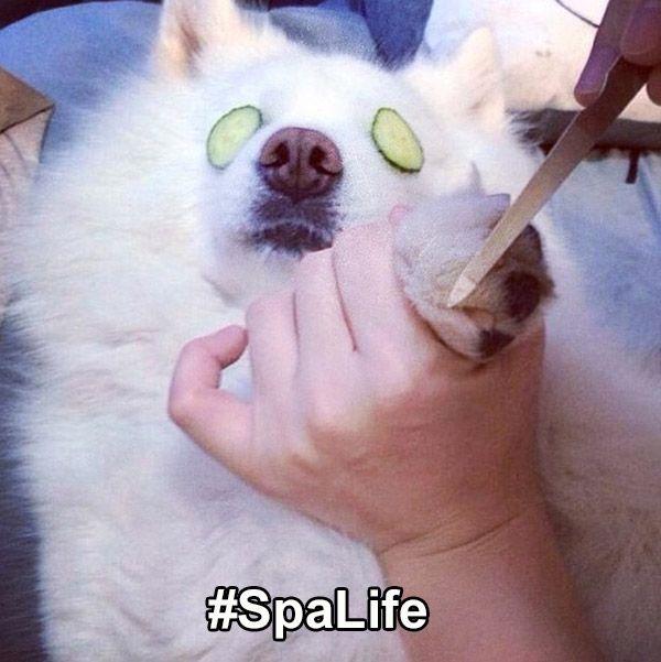 Spa Life Dog