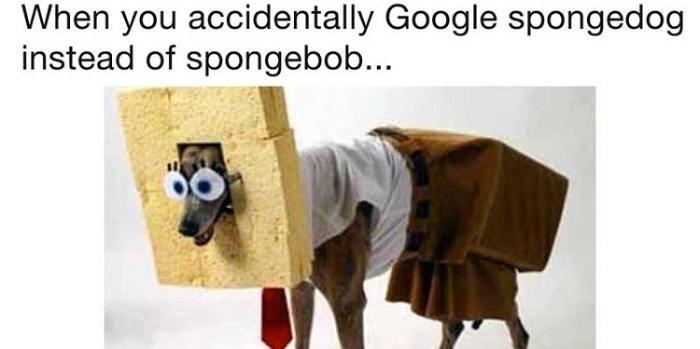 Spongedog