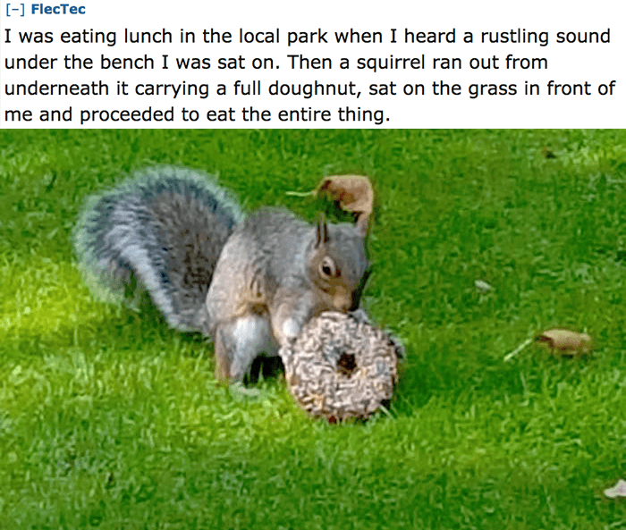 Squirrel Donut
