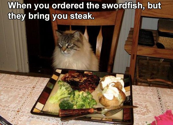 Steak Dinner For A Cat