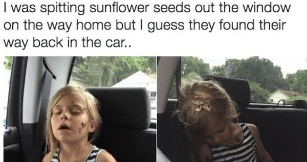 Sunflower Seeds Og