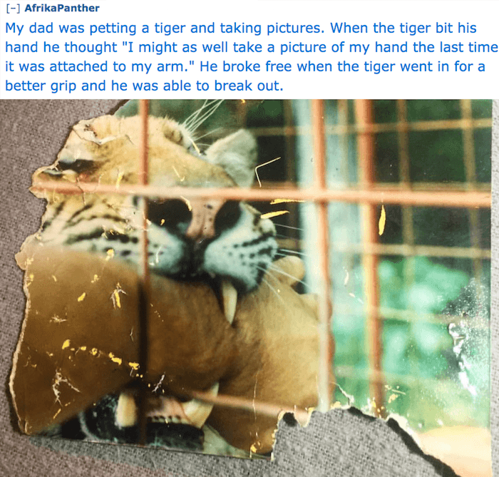 Tiger Biting Arm