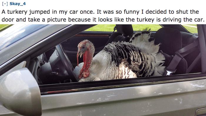 Turkey Driver