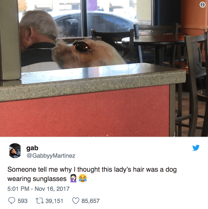 Year In Tweets Dog Sunglasses